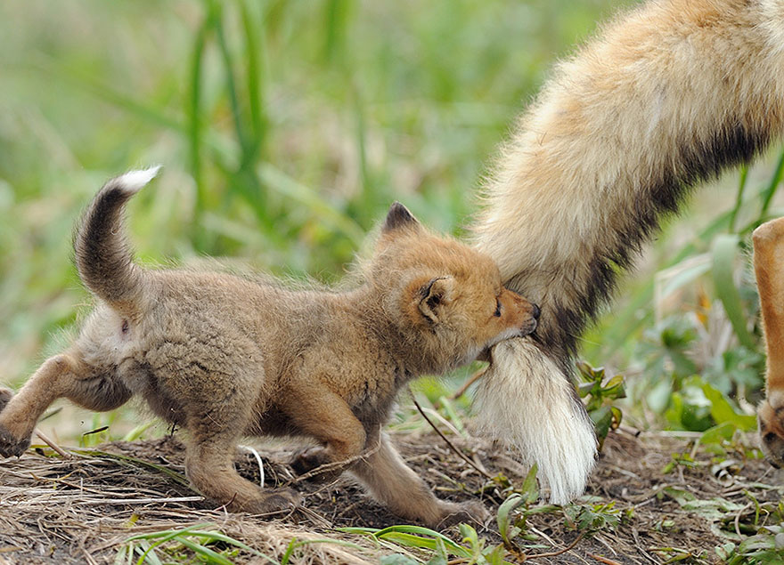 Animal Parenting-06