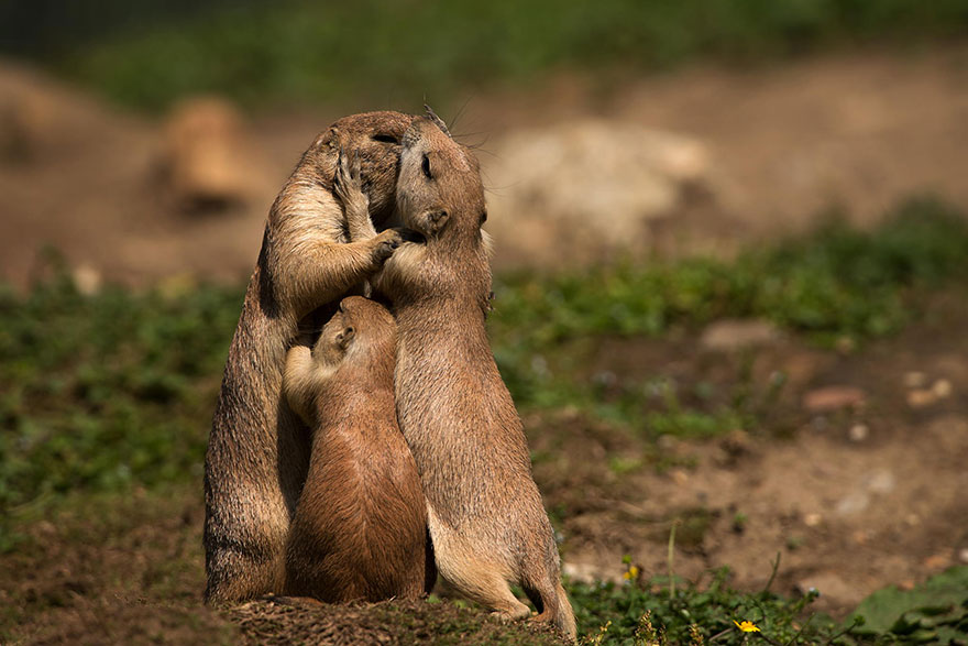 Animal Parenting-07