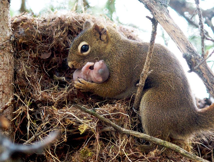 Animal Parenting-08