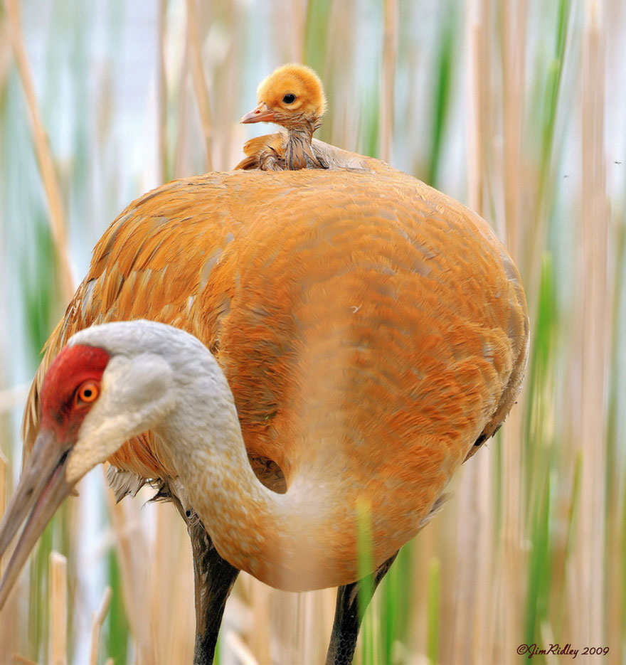 Animal Parenting-10