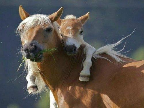 Animal Parenting-15