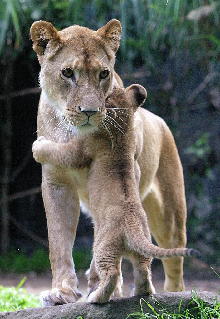 Animal Parenting-17
