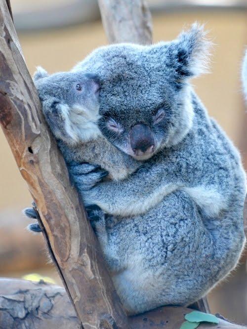 Animal Parenting-18