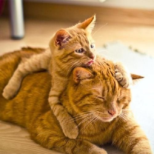 Animal Parenting-20