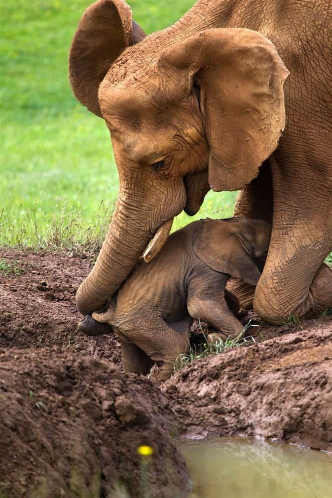 Animal Parenting-22