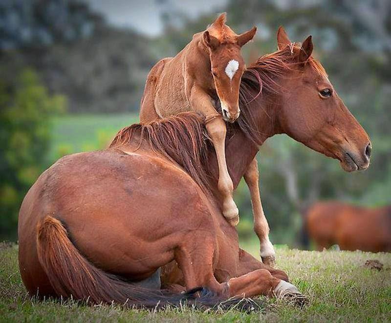 Animal Parenting-23
