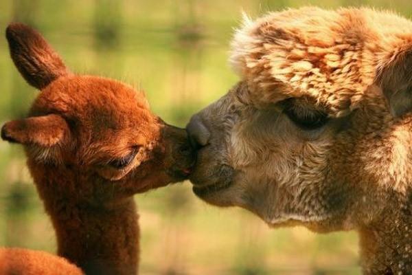 Animal Parenting-24