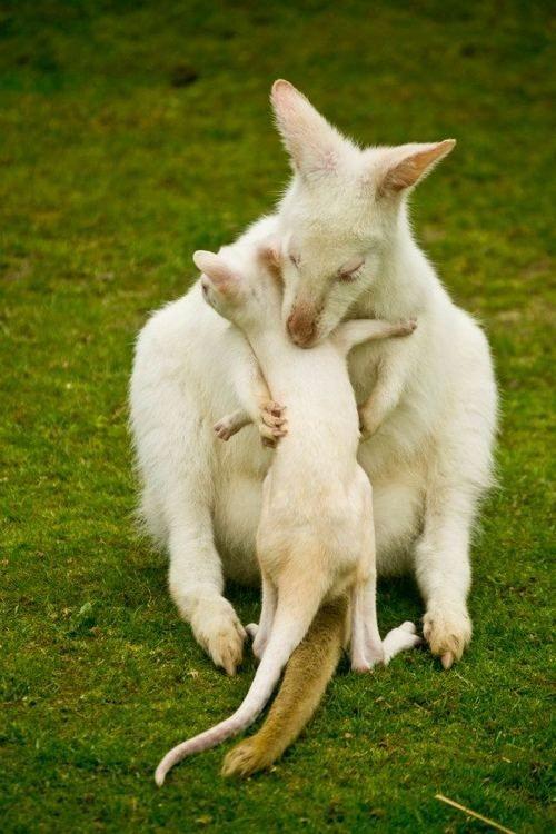 Animal Parenting-25