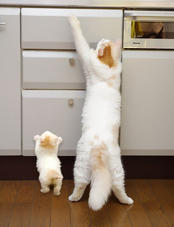 Animal Parenting-26
