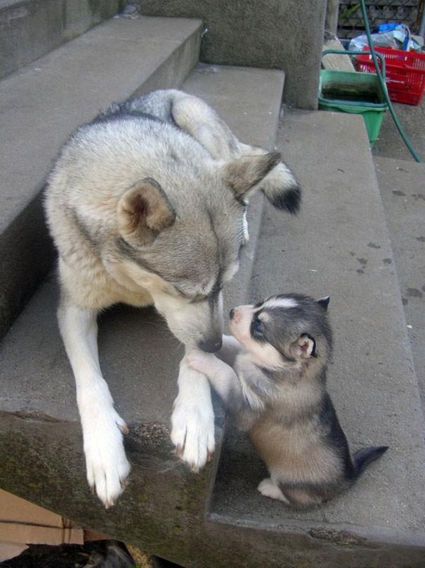 Animal Parenting-28