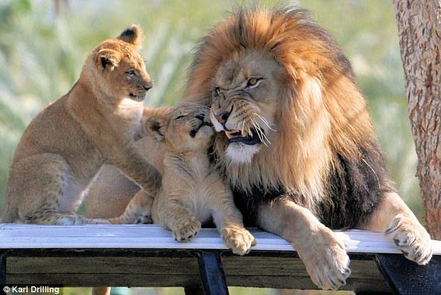Animal Parenting-31