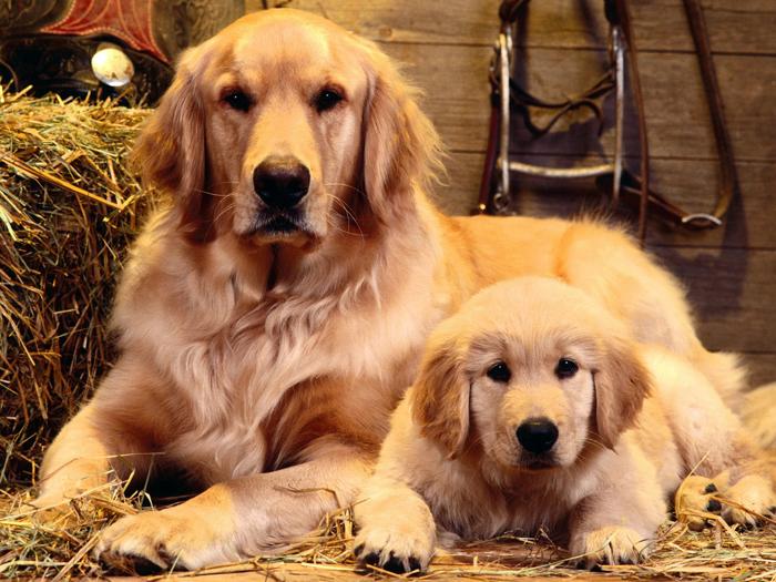 Animal Parenting-32