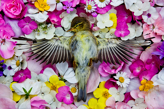 A picture of dead bird