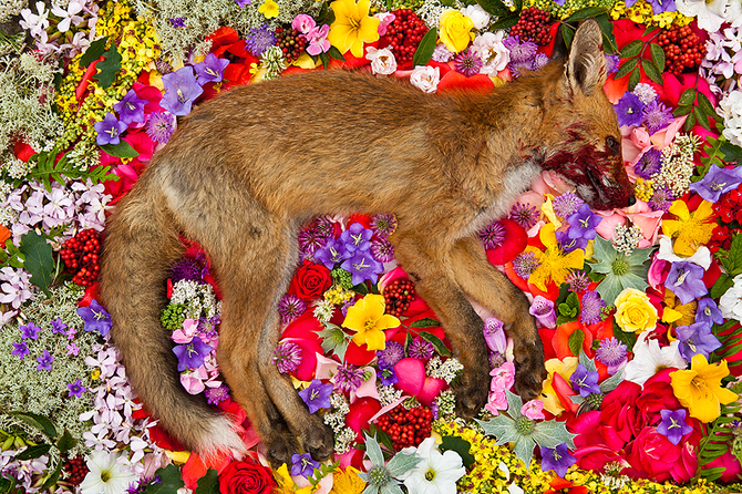 Dead Animals-04
