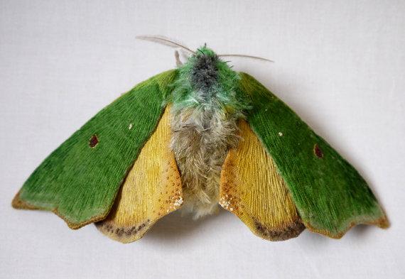 Large Rosema deolis Moth textile art