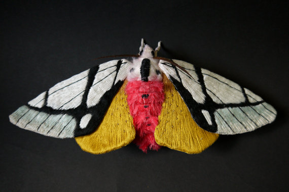 Large black and white wing moth (Areas galactina ) textile art