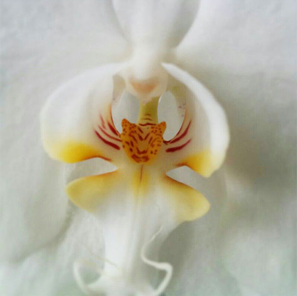 11. Orchid That Looks Like A Tiger
