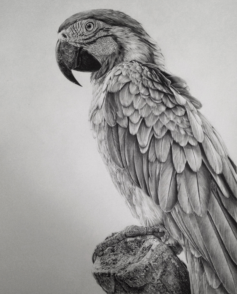Realistic Graphite Drawings-06