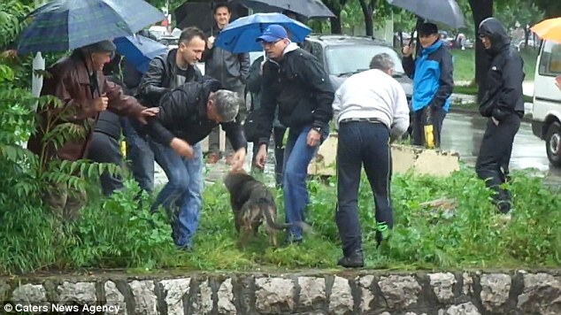 These Men Helping A Dog-04