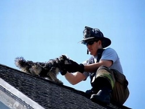 This Man Saving Dog On The Roof