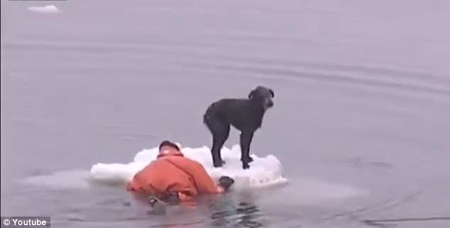 This Fisherman Who Risks His Life to Save a Dog