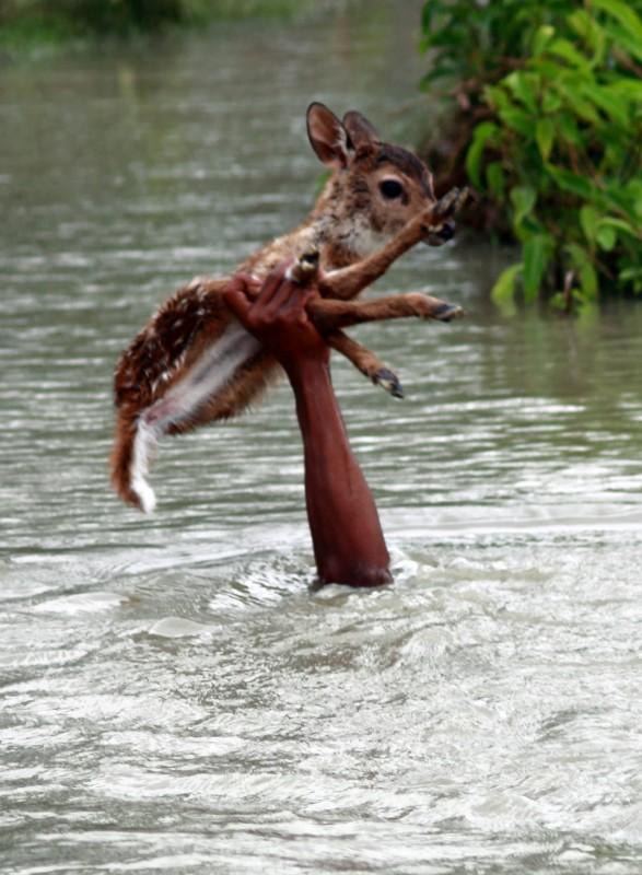 This Guy Saving Baby Deer