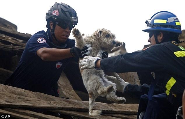 This Japanese Rescue Team