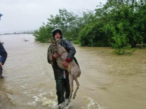 This Man Who Saved A Deer