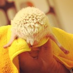 15 Hedgehog Butts That Are Too Cute To Handle