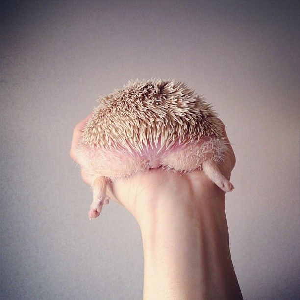 hedghoge butts-07