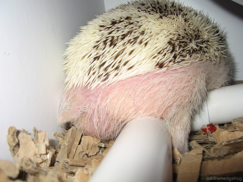 hedghoge butts-09