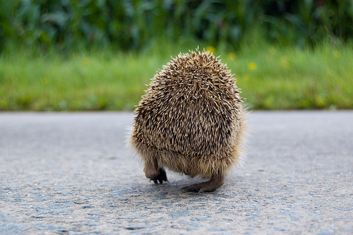 hedghoge butts-10