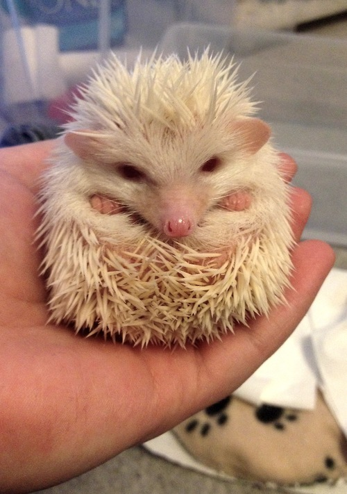 hedghoge butts-13