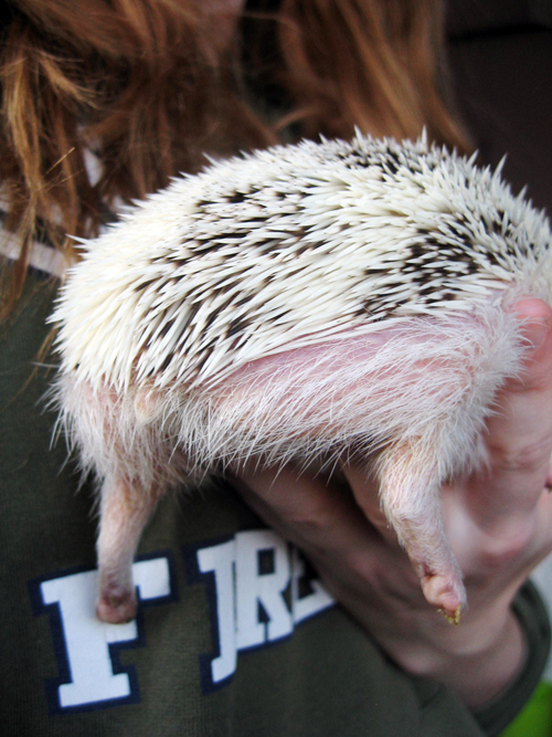 hedghoge butts-14