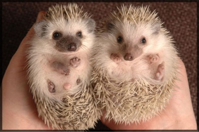 hedghoge butts-15