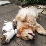 Lets Meet The Most Friendly Friends In The History Of Cats And Dogs