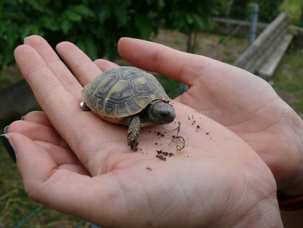 A Tiny Tortoise
