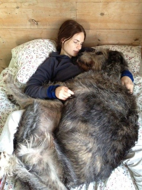 Sleeping With Dogs-02