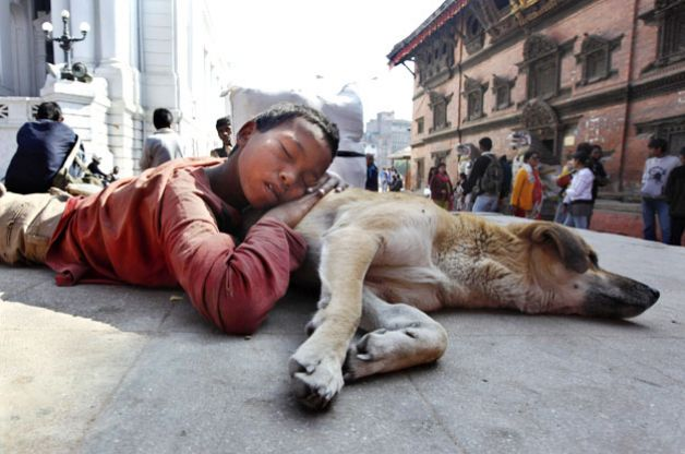 Sleeping With Dogs-15