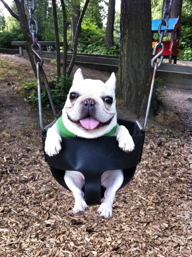 This Adorable Swing