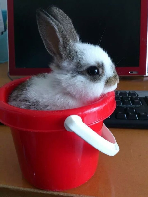 This Bunny Bucket Moment
