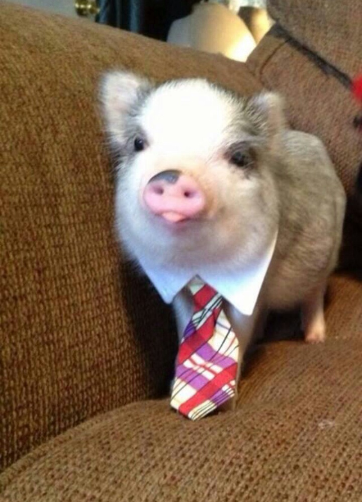 This Business Pig