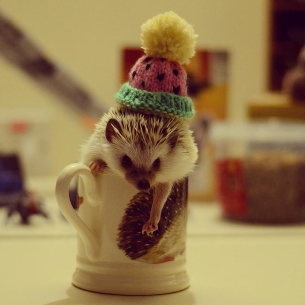 This Cute Hedgehog In Hedgehog Mug Moment