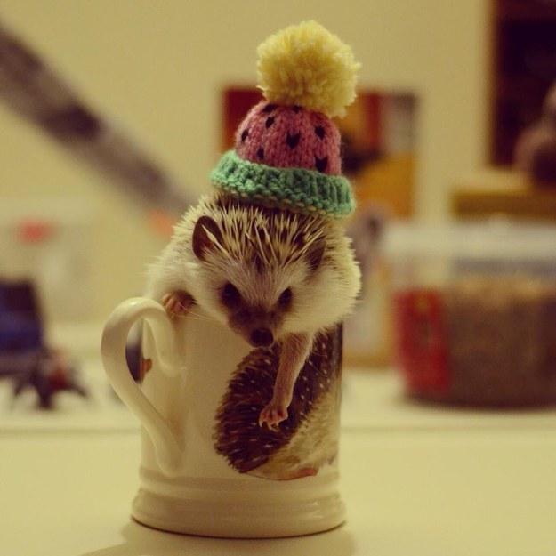 This Cute Hedgehog In Hedgehog Mug Moment