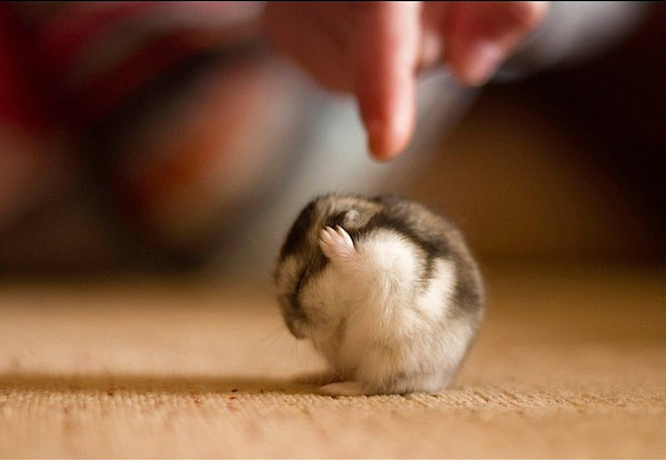 This Hamster Moment