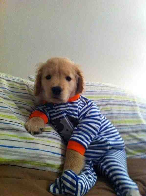 This Ready For Bed Pup