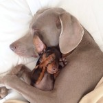 26 Animal  Pictures To Restore Your Faith On Cuteness Of Animals