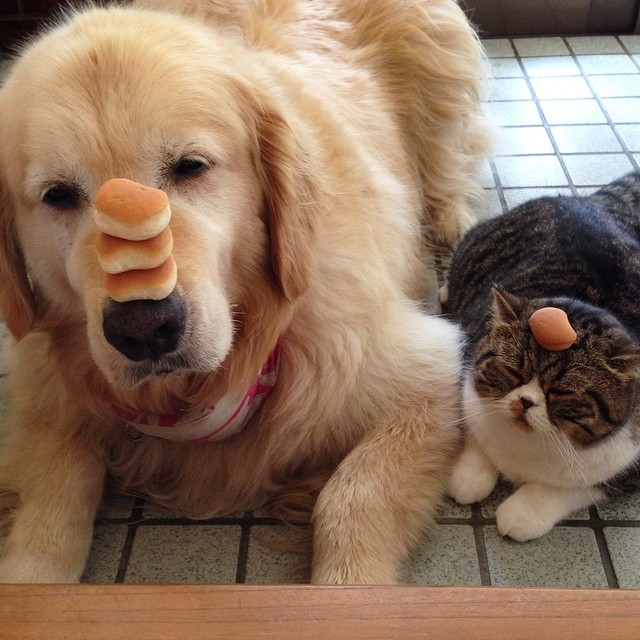 These Dogs And Cats Defied The Odds And Became Best Friends