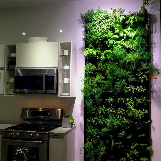 A Wall For Herbs