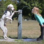 32 Animals Doing People Things And Its The Most Adorable Thing You'll See Today